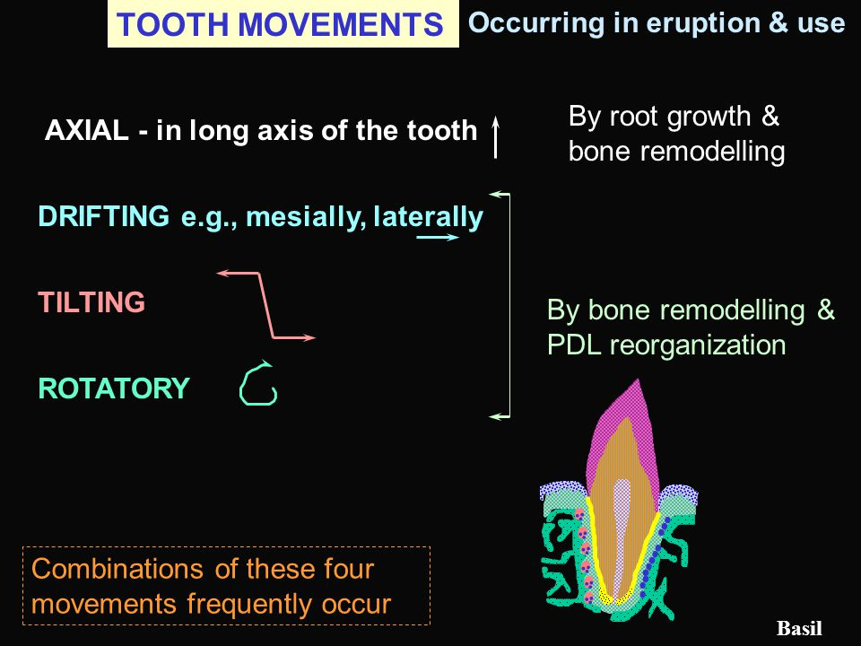 TOOTH MOVEMENTS Occurring in eruption & use