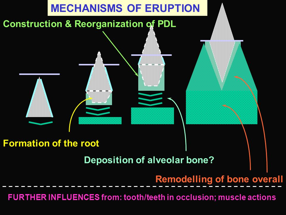 MECHANISMS OF ERUPTION