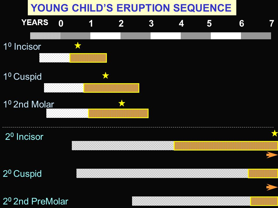 YOUNG CHILD'S ERUPTION SEQUENCE