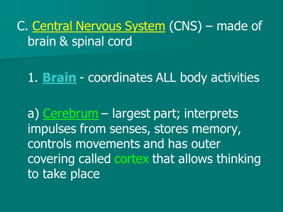 C. Central Nervous System (CNS) – made of brain & spinal cord