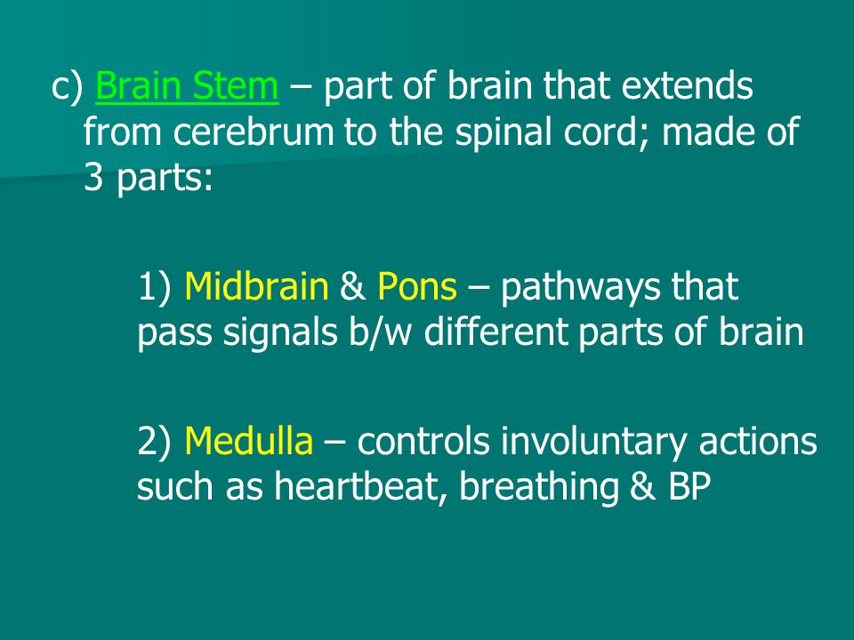 c) Brain Stem – part of brain that extends from cerebrum to the spinal cord; made of 3 parts: