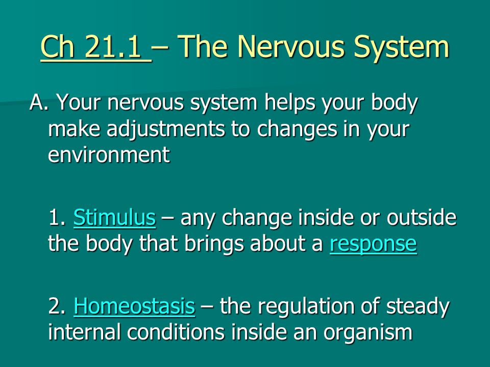 Ch 21.1 – The Nervous System