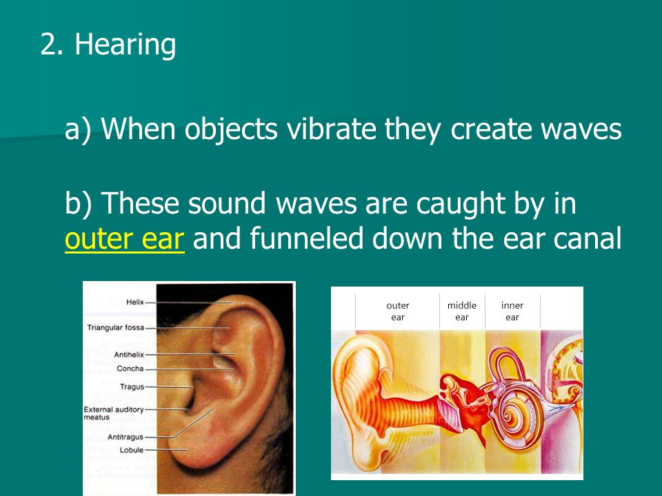 2. Hearing a) When objects vibrate they create waves.