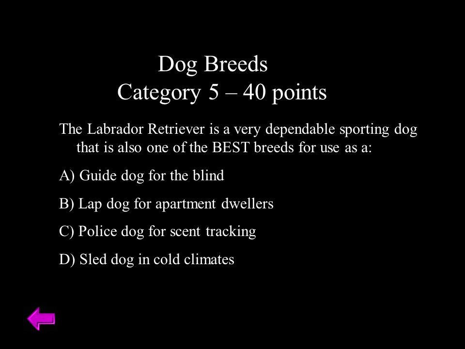 Dog Breeds Category 5 – 40 points