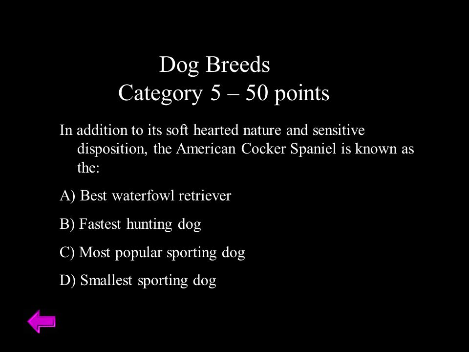 Dog Breeds Category 5 – 50 points
