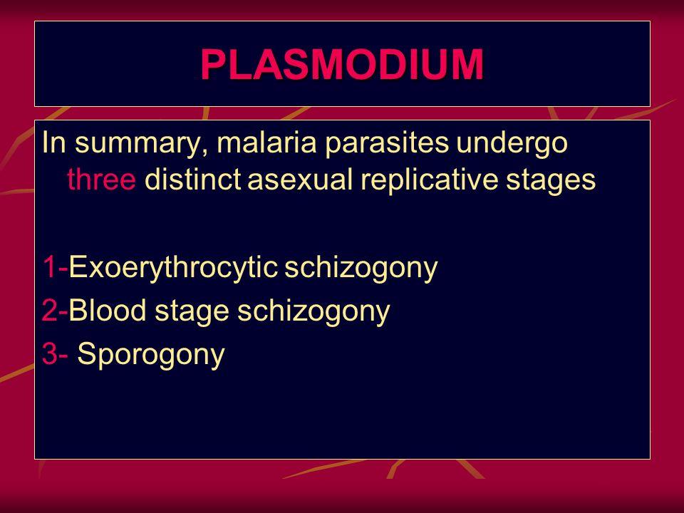 PLASMODIUM In summary, malaria parasites undergo three distinct asexual replicative stages. 1-Exoerythrocytic schizogony.