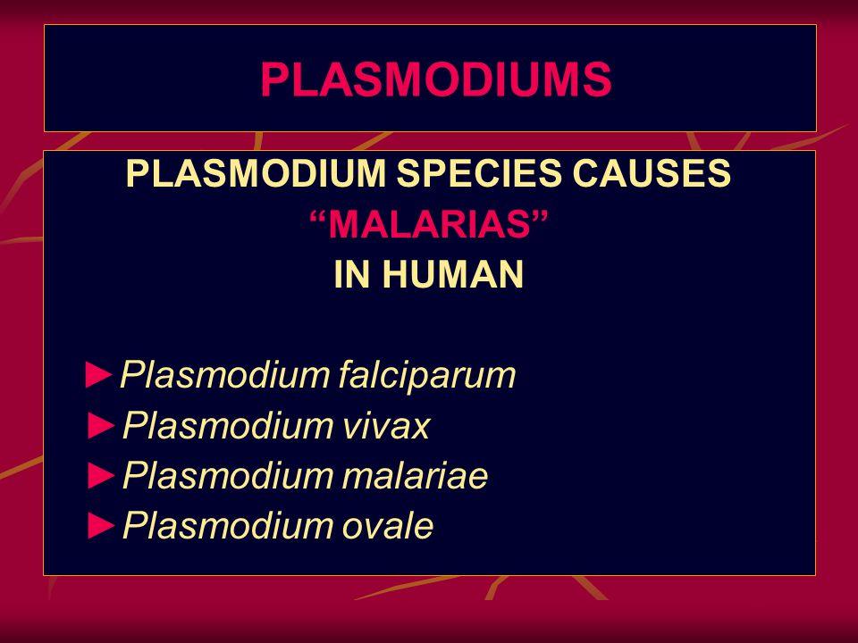 PLASMODIUM SPECIES CAUSES