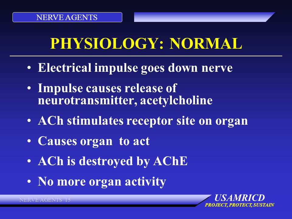 PHYSIOLOGY: NORMAL Electrical impulse goes down nerve