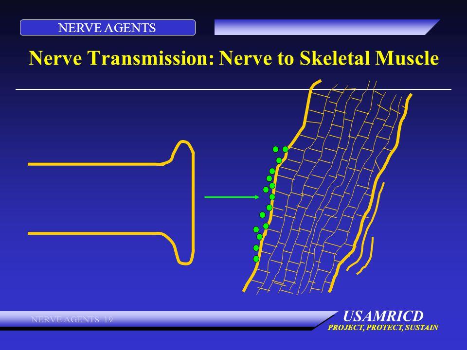 Nerve Transmission: Nerve to Skeletal Muscle