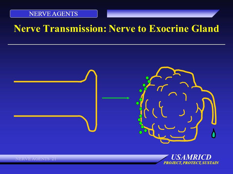 Nerve Transmission: Nerve to Exocrine Gland