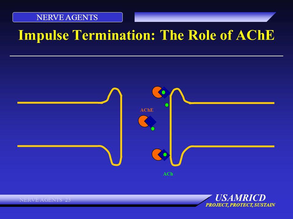 Impulse Termination: The Role of AChE