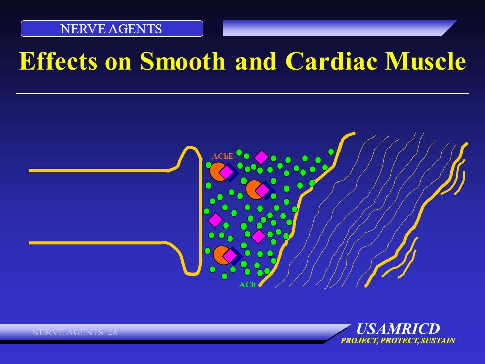 Effects on Smooth and Cardiac Muscle