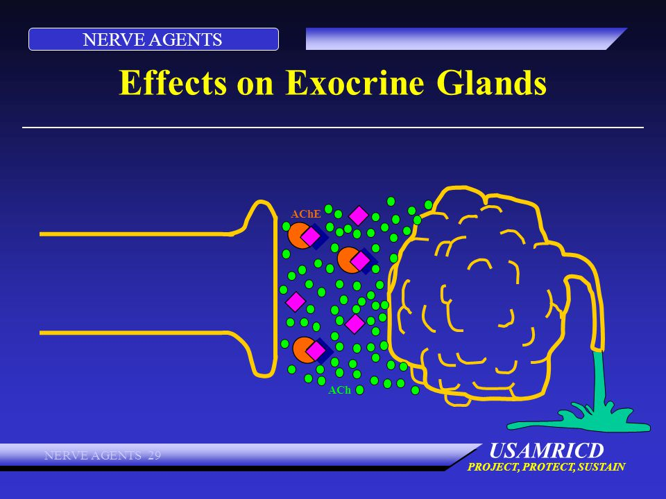Effects on Exocrine Glands