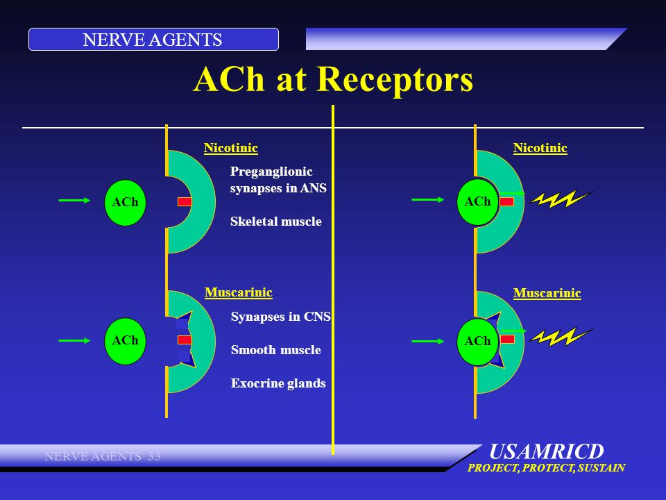 ACh at Receptors Nicotinic Nicotinic Preganglionic synapses in ANS
