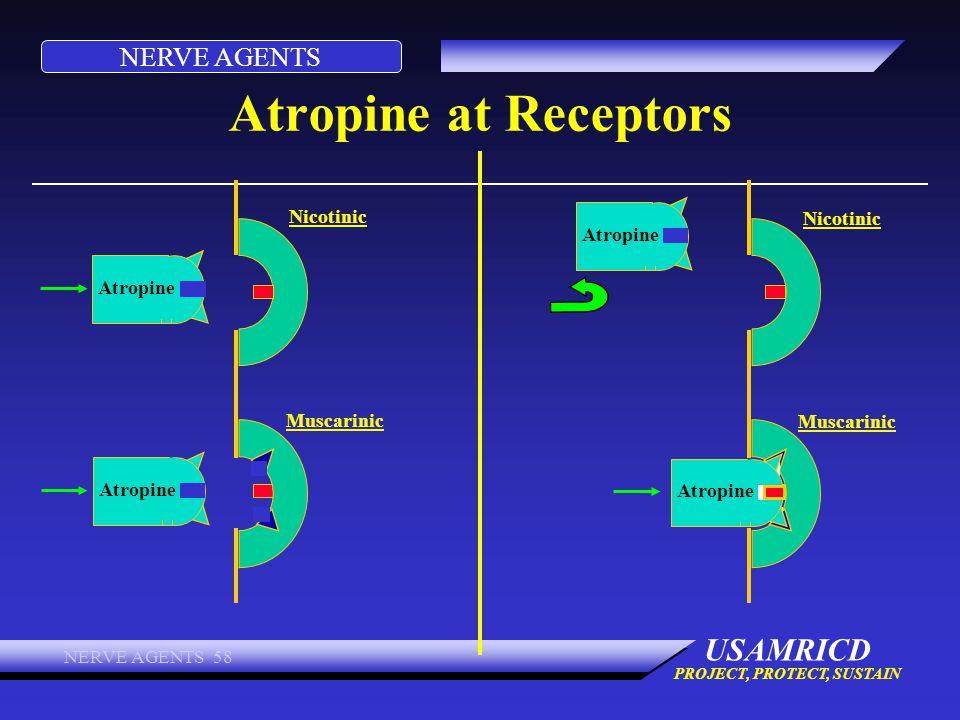 Atropine at Receptors Nicotinic Nicotinic Atropine Atropine Muscarinic
