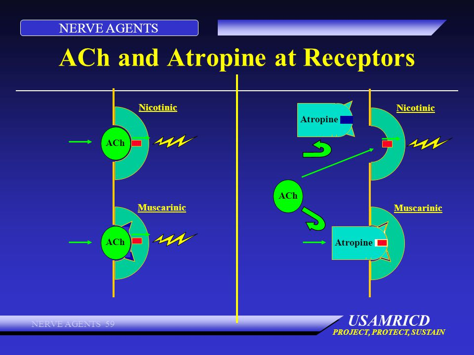 ACh and Atropine at Receptors