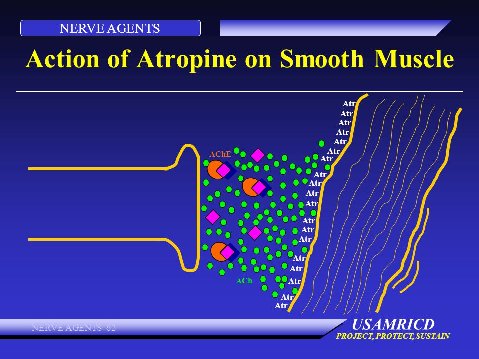 Action of Atropine on Smooth Muscle
