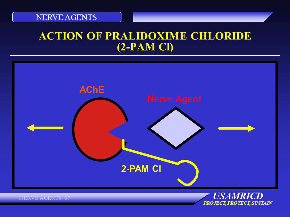 ACTION OF PRALIDOXIME CHLORIDE (2-PAM Cl)