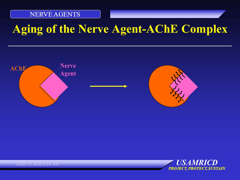 Aging of the Nerve Agent-AChE Complex