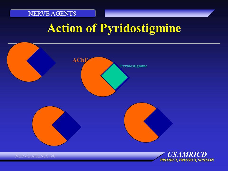 Action of Pyridostigmine