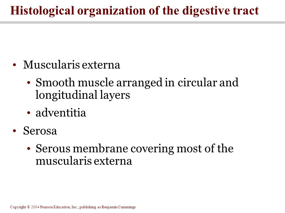 Histological organization of the digestive tract