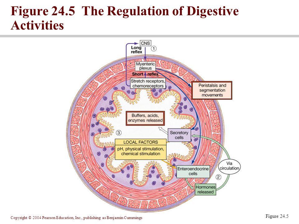 Figure 24.5 The Regulation of Digestive Activities
