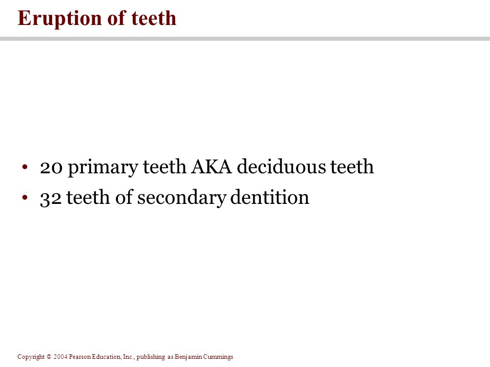 Eruption of teeth 20 primary teeth AKA deciduous teeth
