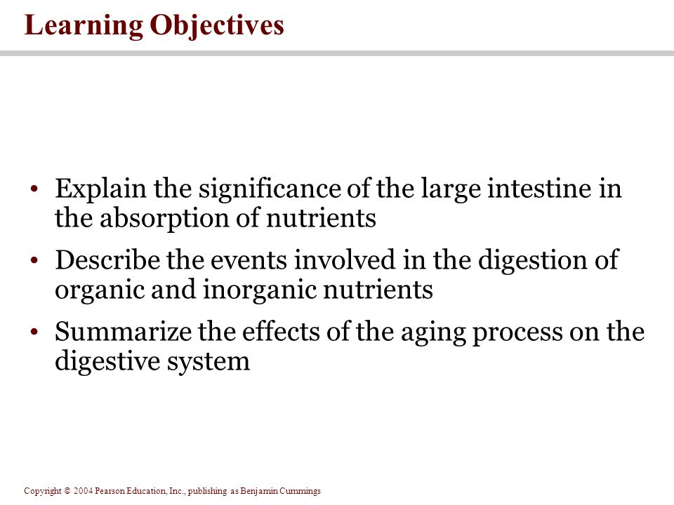 Learning Objectives Explain the significance of the large intestine in the absorption of nutrients.