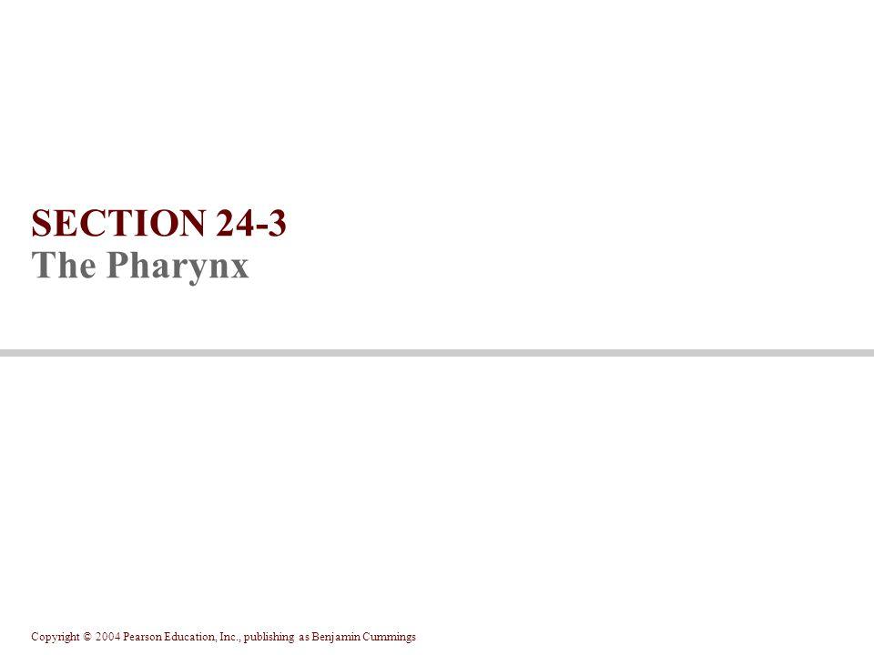 SECTION 24-3 The Pharynx