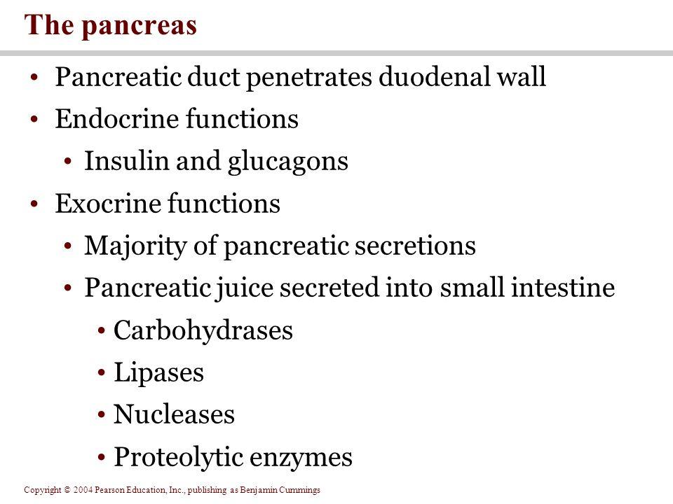 The pancreas Pancreatic duct penetrates duodenal wall