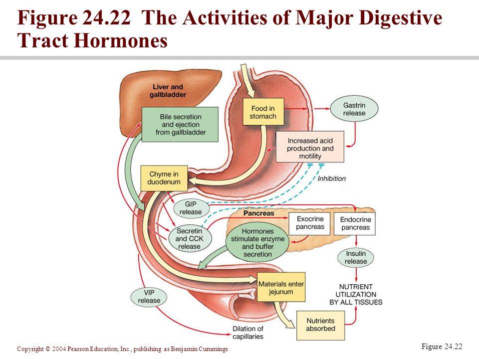 Figure 24.22 The Activities of Major Digestive Tract Hormones