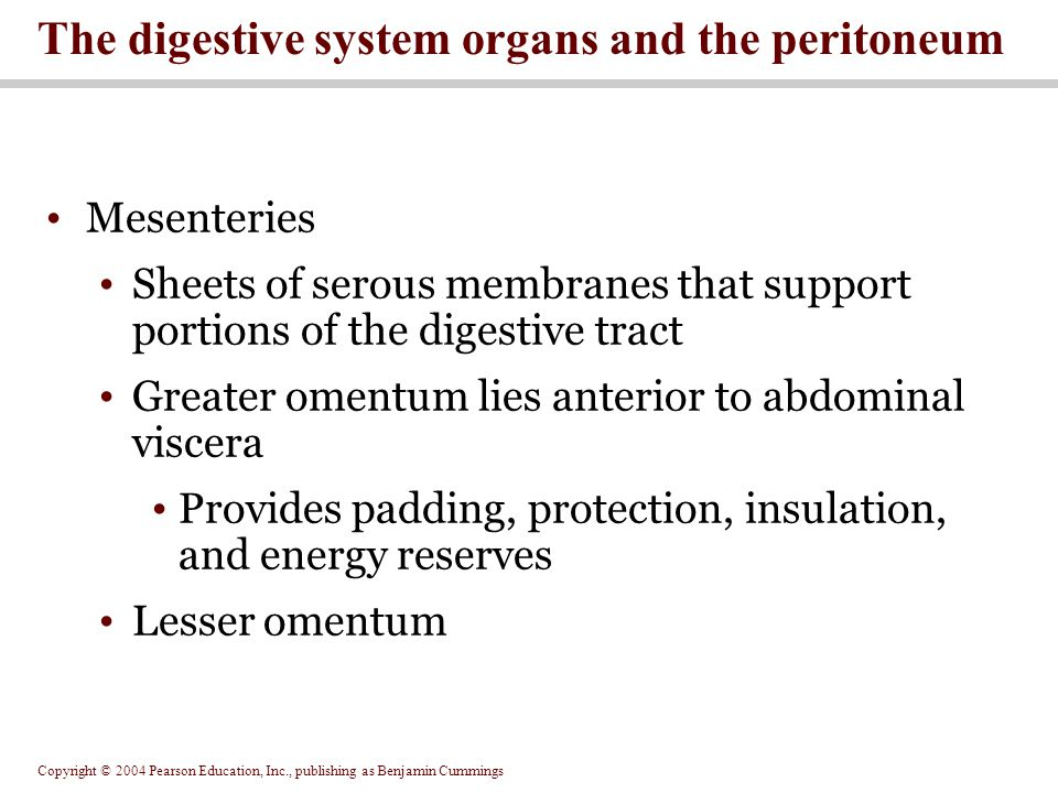 The digestive system organs and the peritoneum