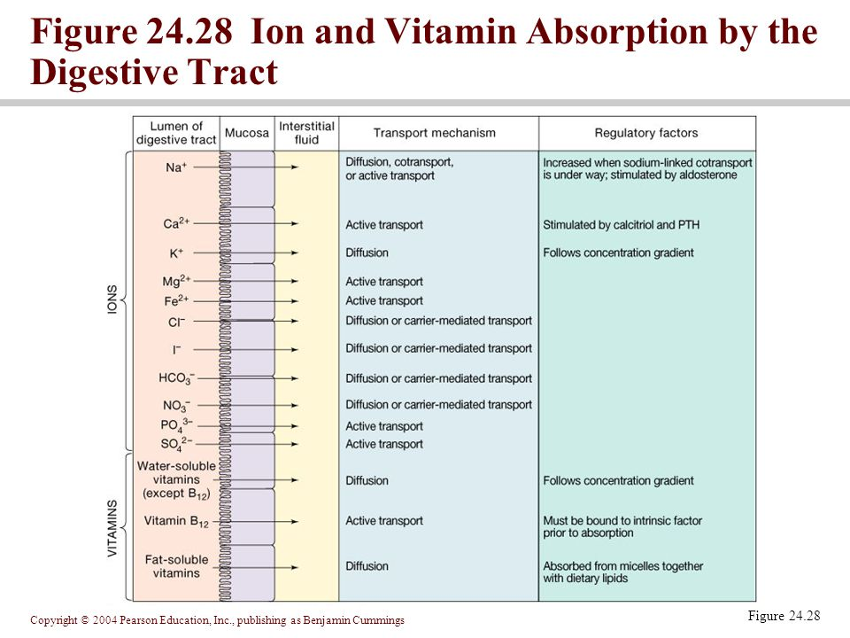 Figure 24.28 Ion and Vitamin Absorption by the Digestive Tract