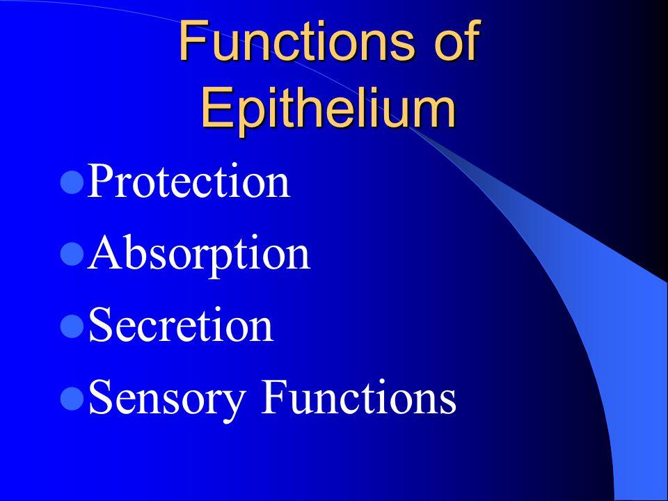 Functions of Epithelium