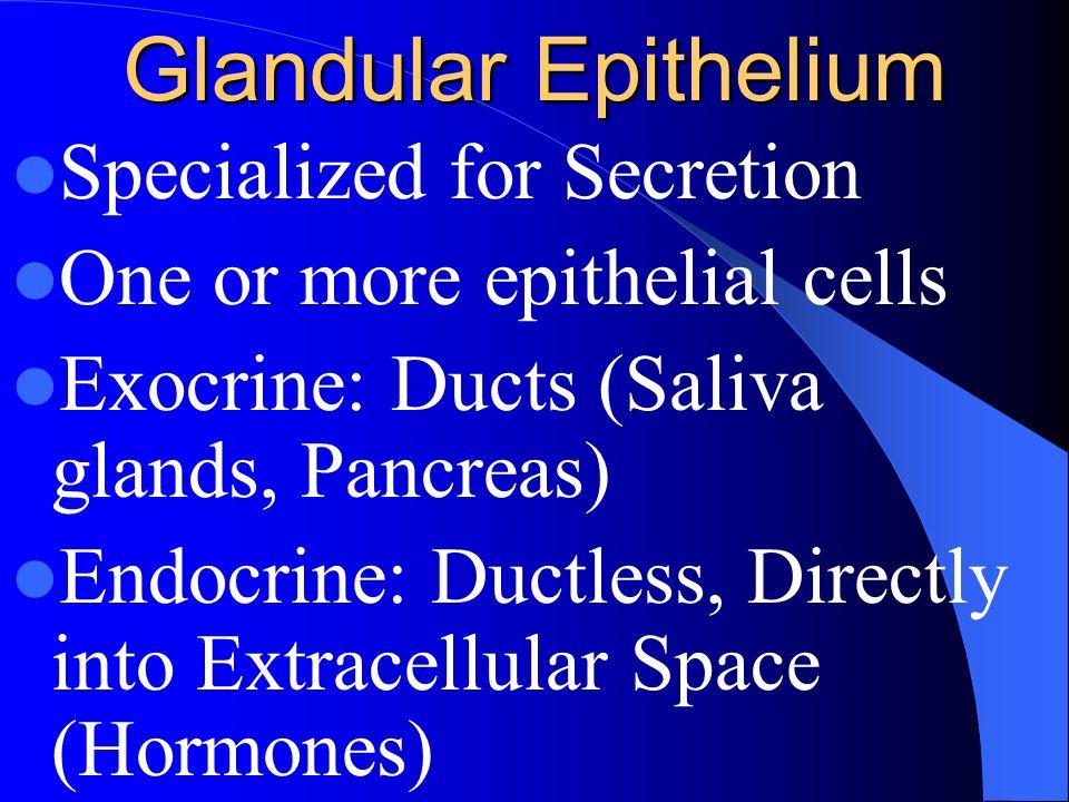 Glandular Epithelium Specialized for Secretion