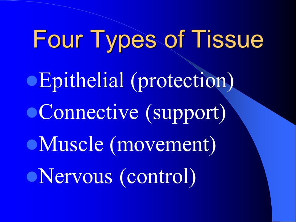 Four Types of Tissue Epithelial (protection) Connective (support)
