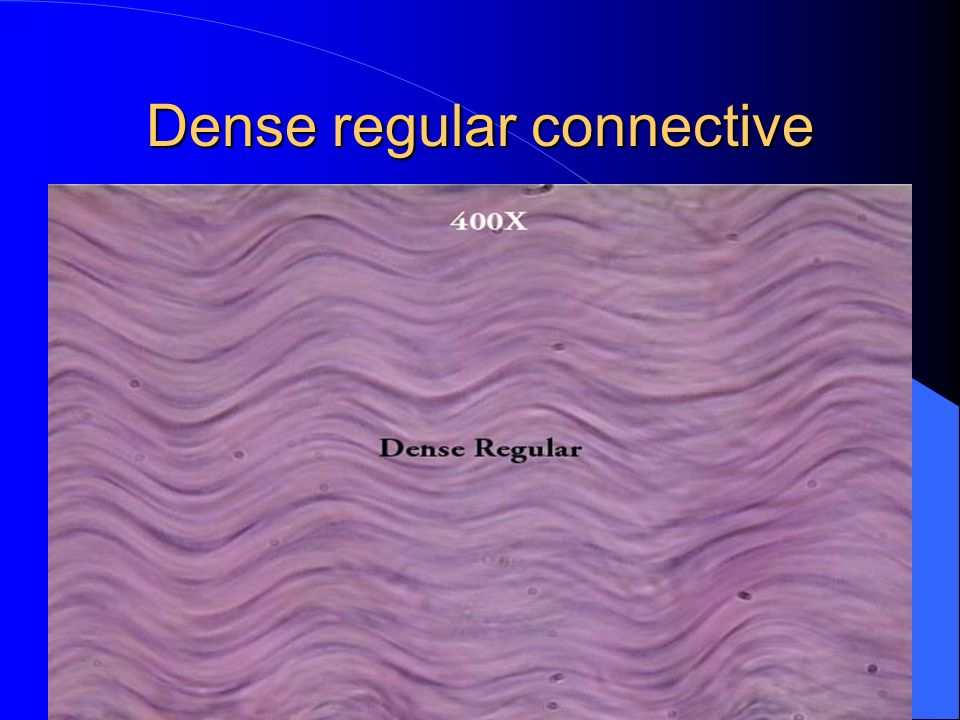 Dense regular connective