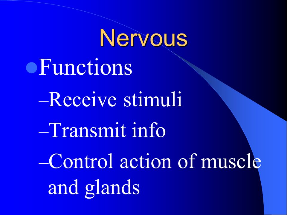 Nervous Functions Receive stimuli Transmit info