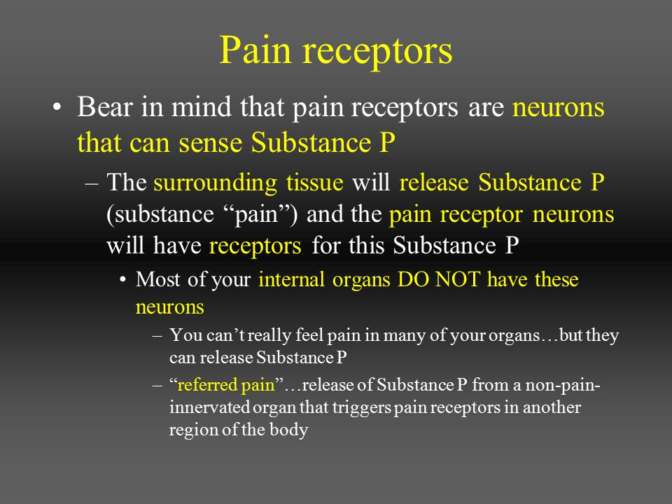 Pain receptors Bear in mind that pain receptors are neurons that can sense Substance P.