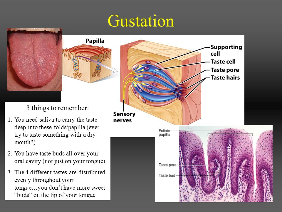 Gustation 3 things to remember:
