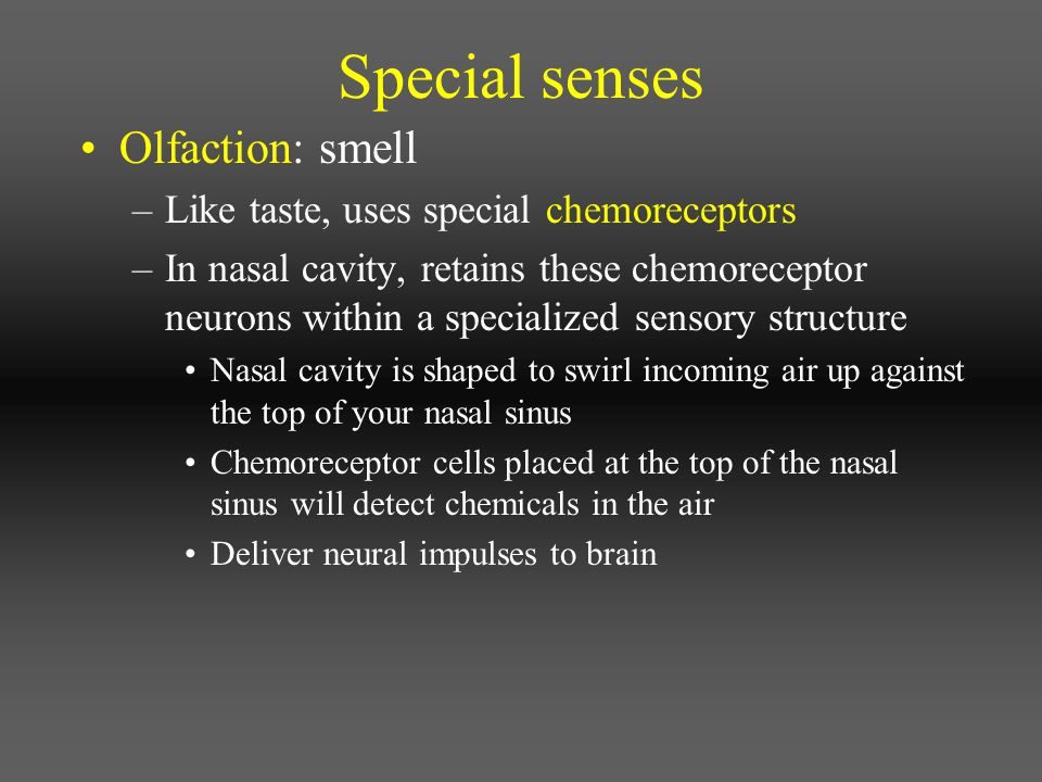 Special senses Olfaction: smell