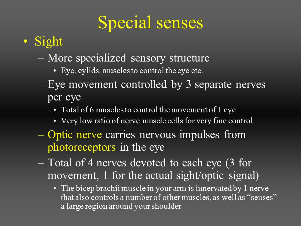 Special senses Sight More specialized sensory structure