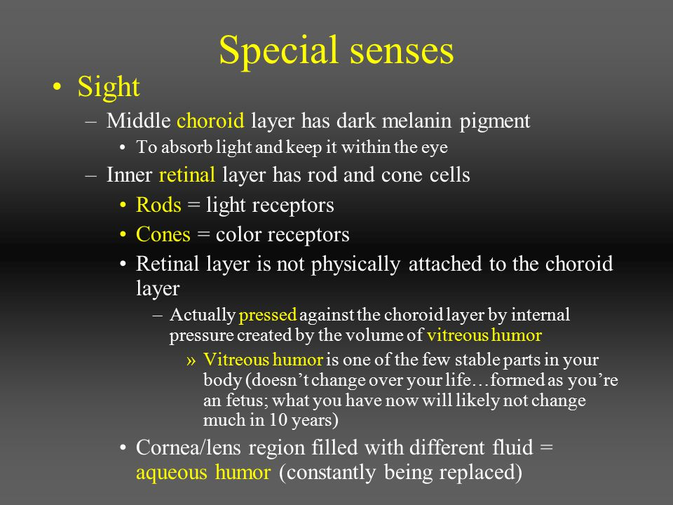 Special senses Sight Middle choroid layer has dark melanin pigment