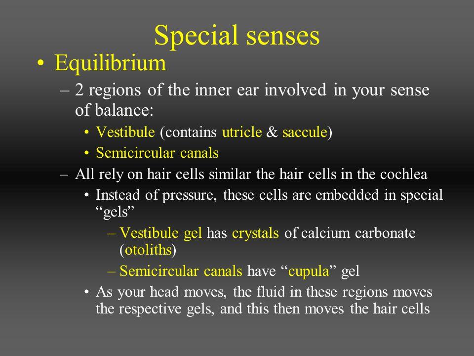 Special senses Equilibrium