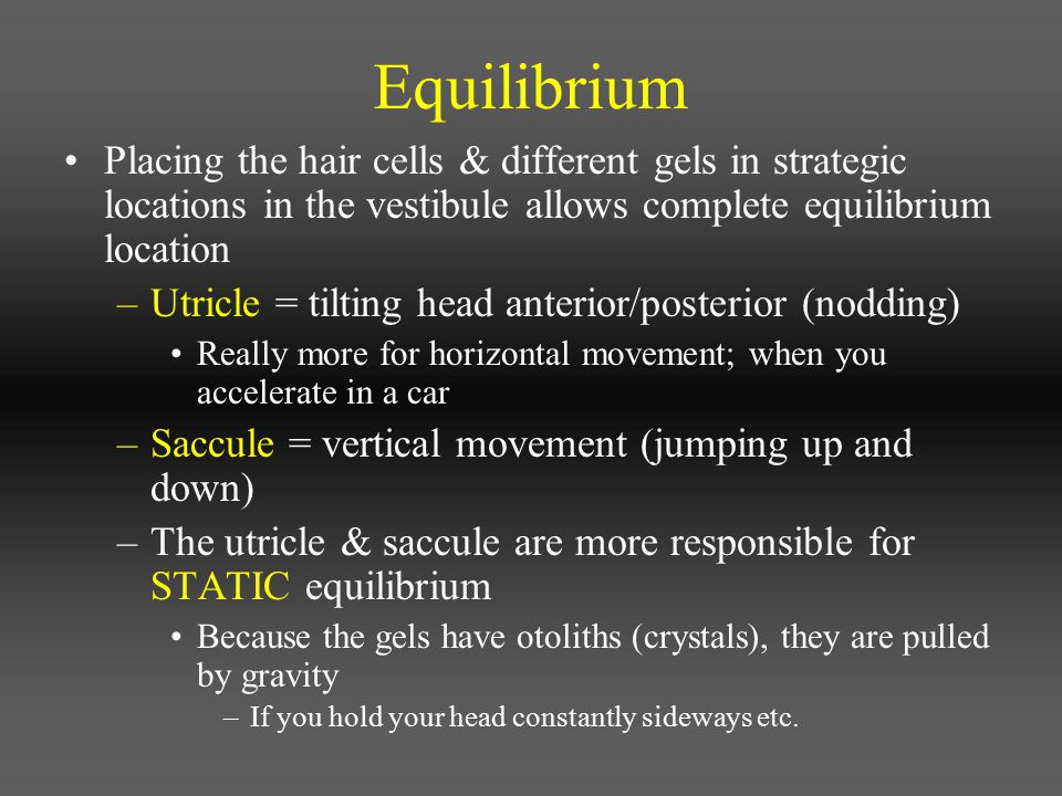 Equilibrium Placing the hair cells & different gels in strategic locations in the vestibule allows complete equilibrium location.
