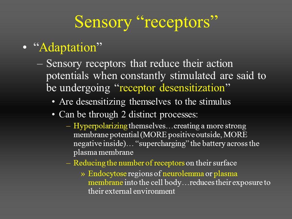 Sensory receptors Adaptation
