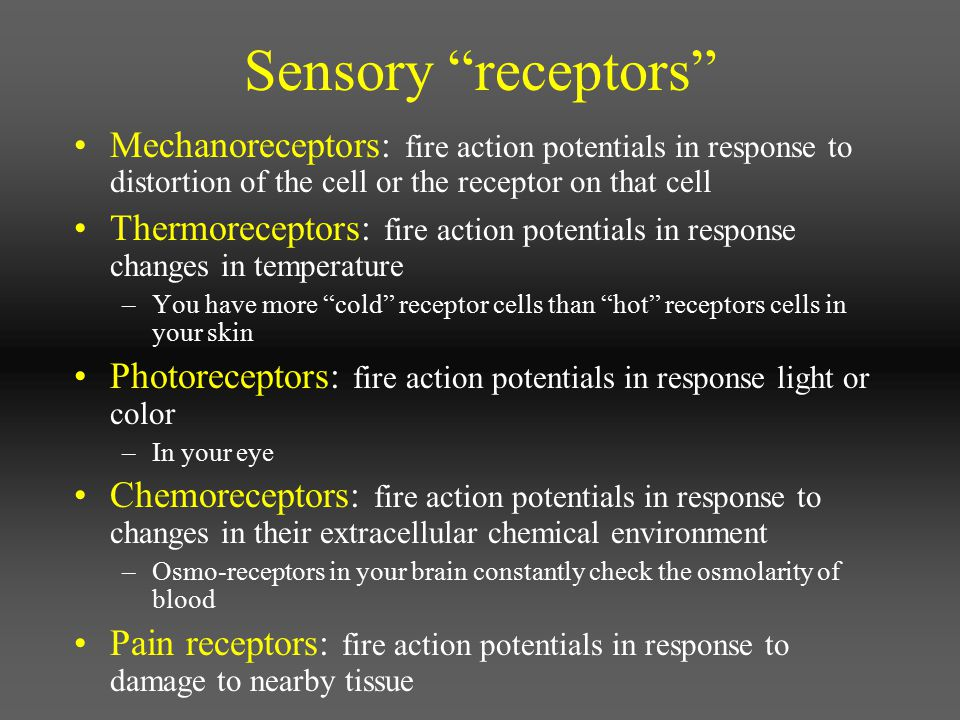 Sensory receptors Mechanoreceptors: fire action potentials in response to distortion of the cell or the receptor on that cell.