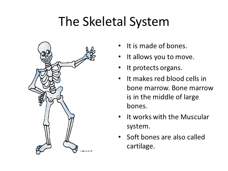 The Skeletal System It is made of bones. It allows you to move.