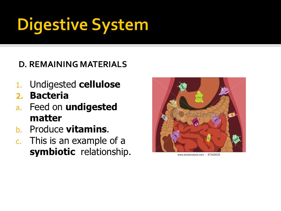 Digestive System Undigested cellulose Bacteria