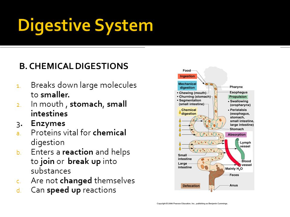 Digestive System B. Chemical digestions